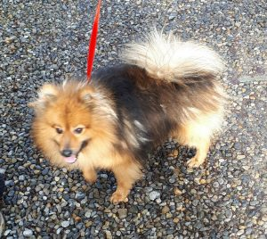 Rusty – from Kildare Pound
