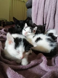 Kittens needing homes
