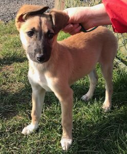 Lacey (Reserved)