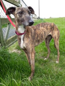May (reserved)