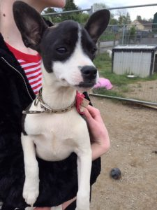 Molly (reserved)