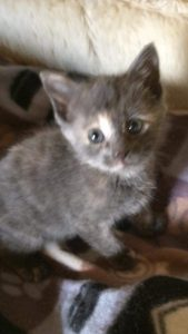Kitten in need of a home