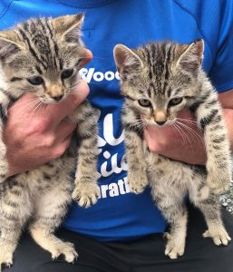 Lee and Cooper are looking for homes