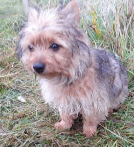 Teddy (reserved)
