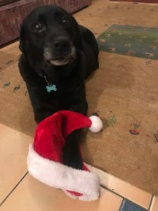 GUNNER IS GOING TO HAVE A VERY HAPPY CHRISTMAS IN HIS NEW HOME