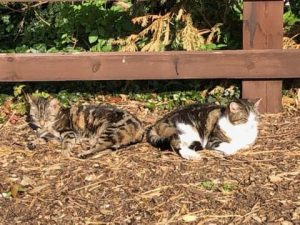 TWO OLD CATS NEED A HOME TOGETHER