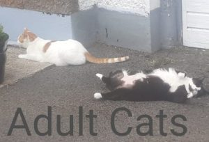 HOMES NEEDED FOR OLDER CATS