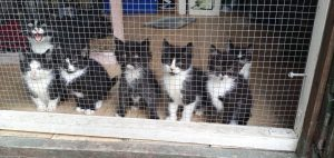 THESE SEVEN KITTENS ARE LOOKING FOR THEIR FOREVER HOMES