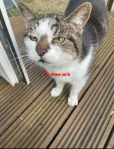 MR MAYNOOTH IS LOOKING FOR A HOME